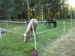 Accueil Cheval dans Cheval/Horse dscf2853-300x225